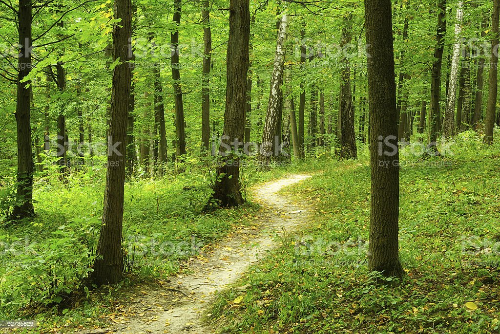 forest - Royalty-free Color Image Stock Photo