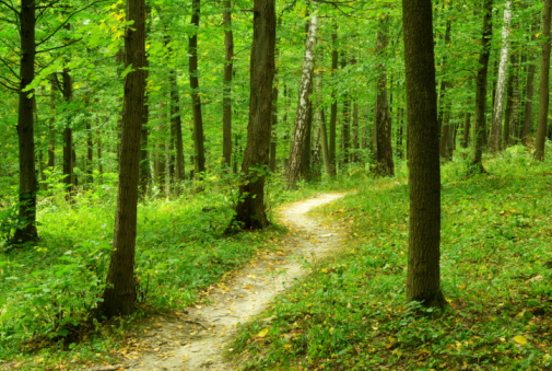 Forest Stock Photo - Download Image Now