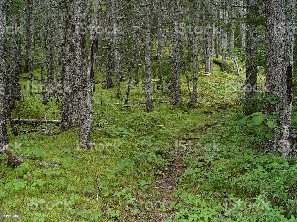 Forest - Royalty-free Branch - Plant Part Stock Photo