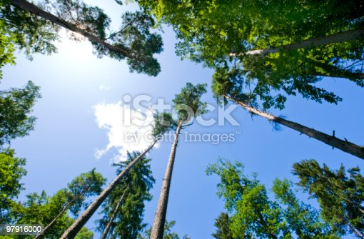 Forest Stock Photo & More Pictures of Beauty In Nature