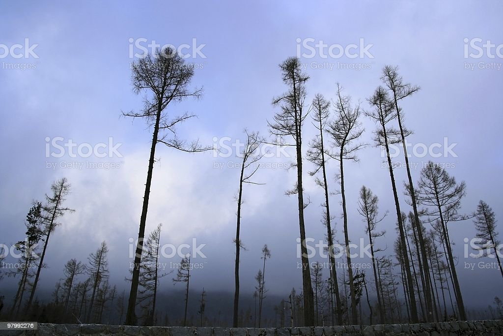 Forest royalty free stockfoto