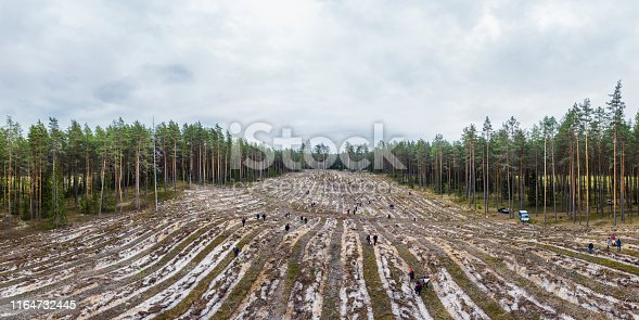 People in the spring planted pine forest near Riga. Photo from a drone