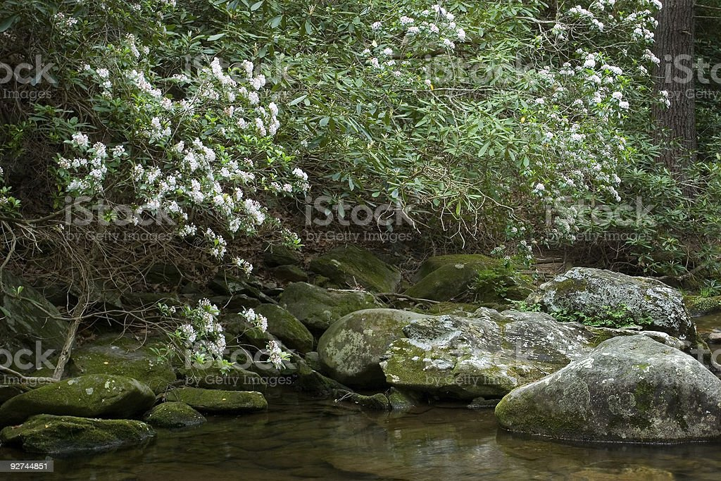 Forest Pool royalty-free stock photo