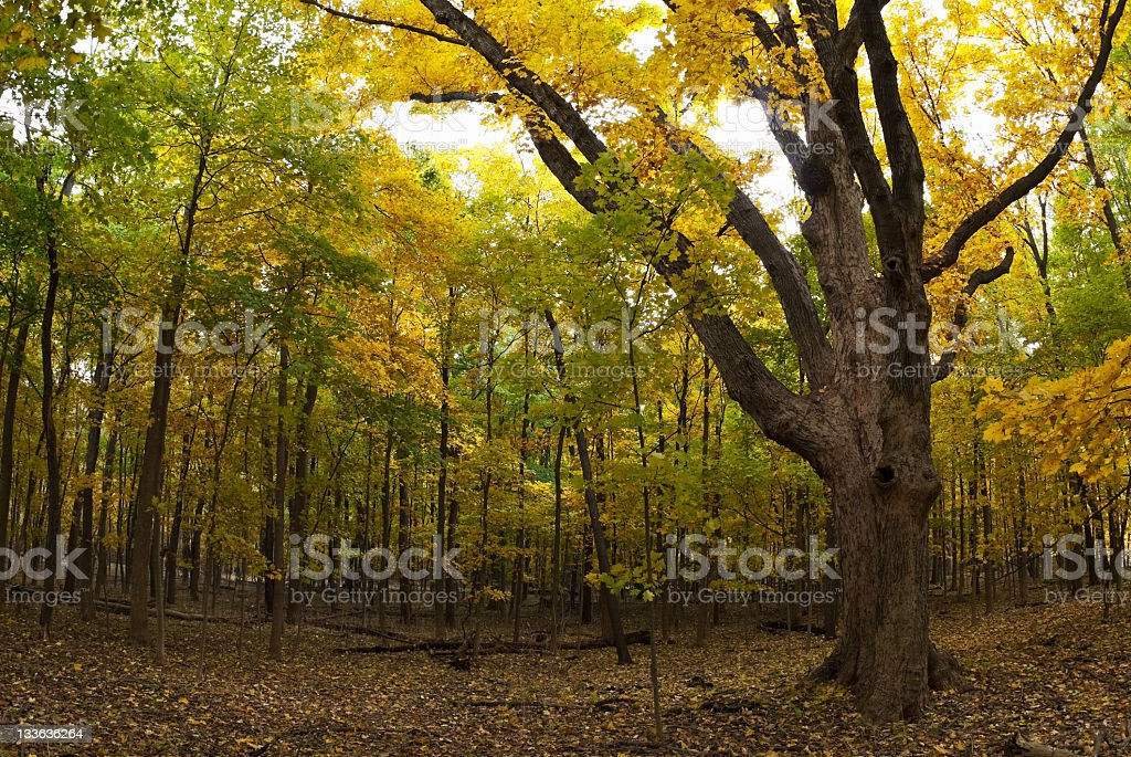 Forest preserve in autumn stock photo