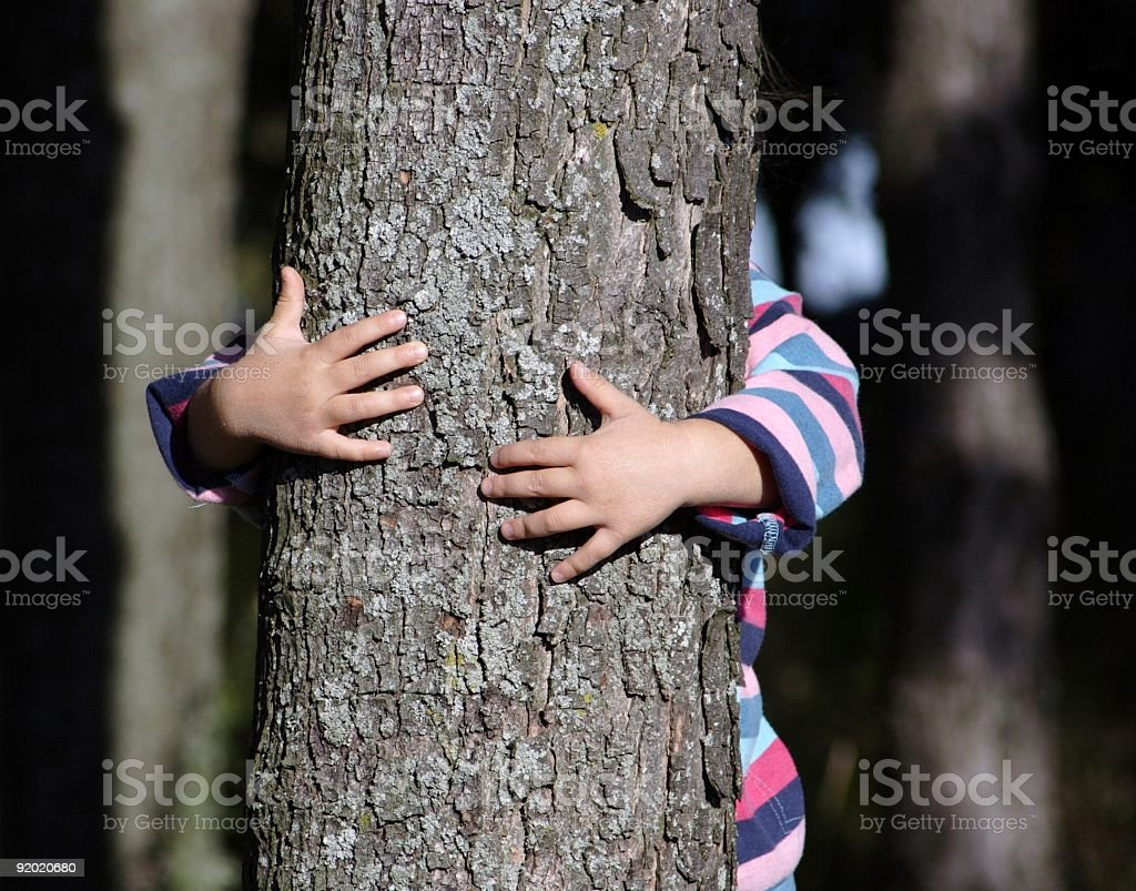Forest protection royalty-free stock photo
