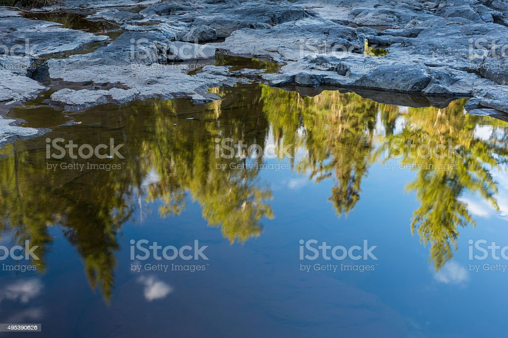 Forest Puddle Reflection A reflection of a forest in a water puddle. 2015 Stock Photo
