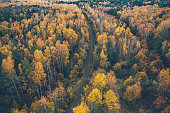 A railway surrounded by autumn forest. Aerial drone shot.