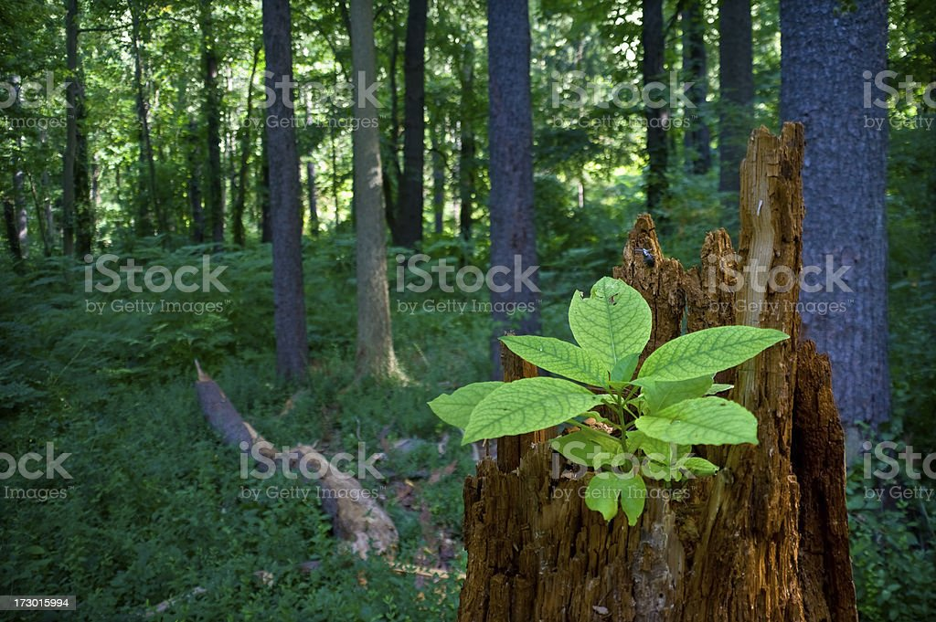 Forest Recycling royalty-free stock photo
