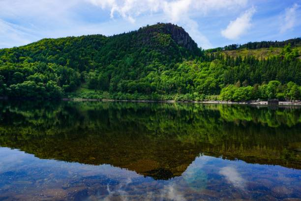 forest reflection on lake stock photo