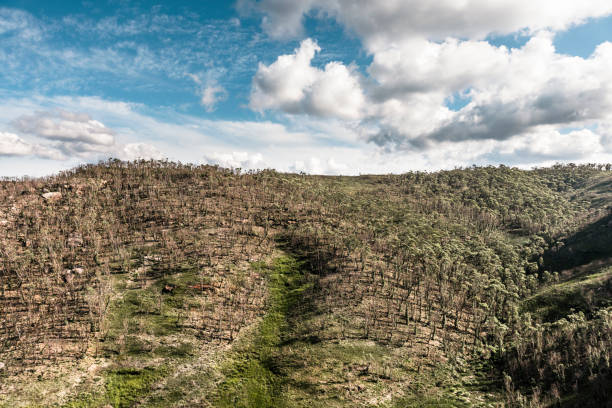 Forest regeneration after the bushfires in The Blue Mountains in Australia stock photo