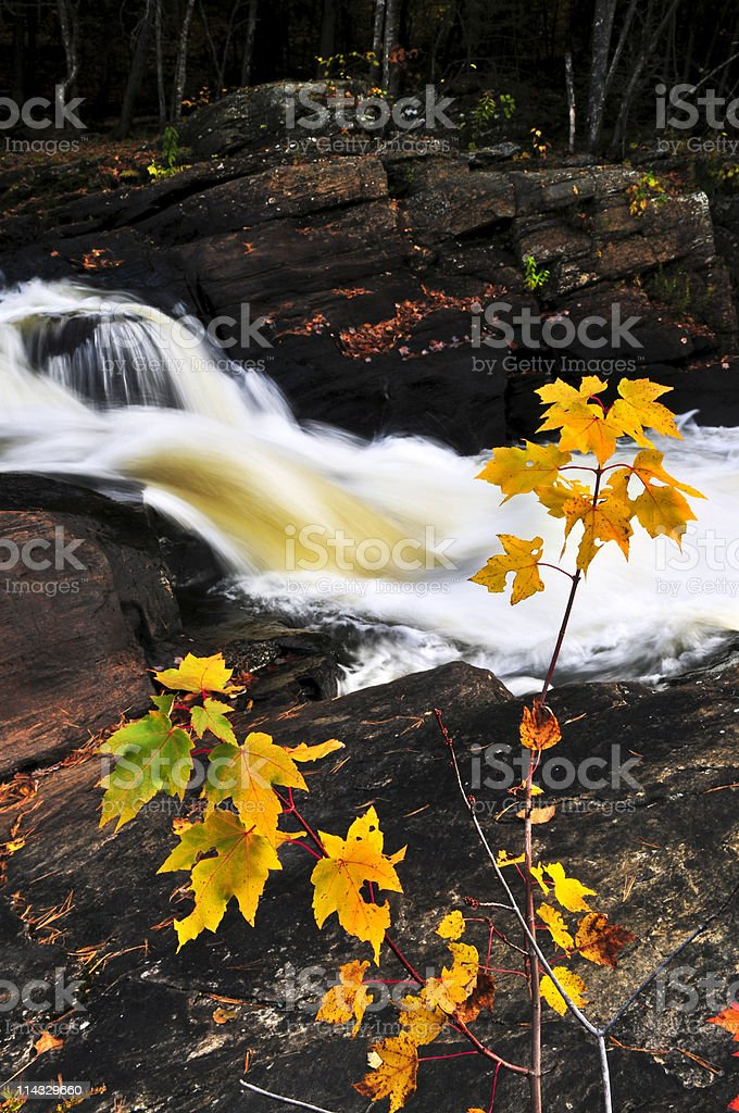Forest river in the fall royalty-free stock photo