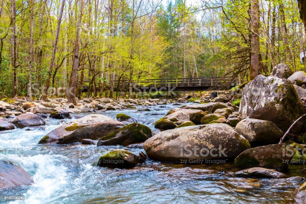 Wald-Fluss. Wasserkaskaden über die Felsen in den Great Smoky Mountains National Park, USA – Foto