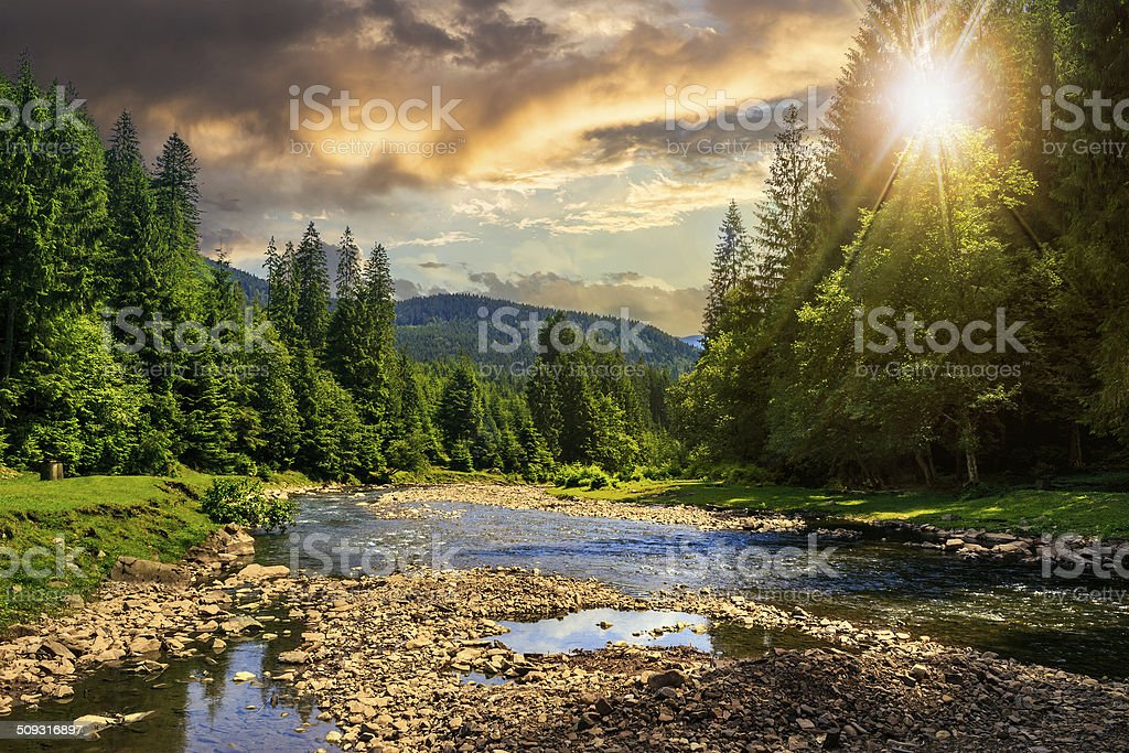 forest river with stones at sunset stock photo