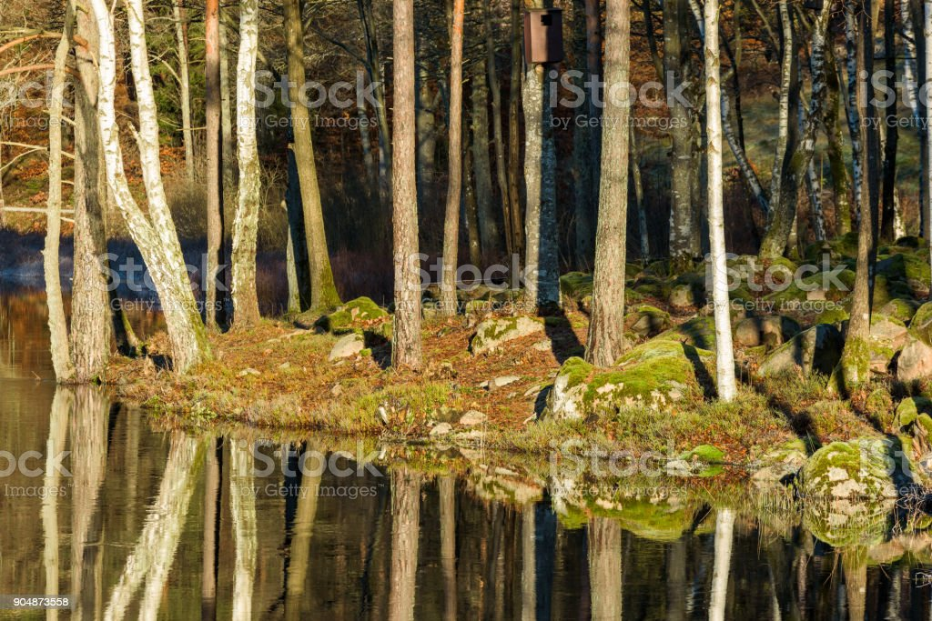 Forest riverbank stock photo