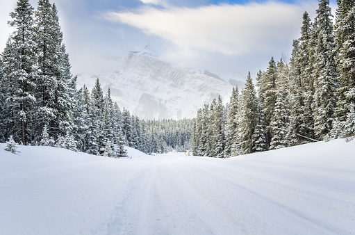 Forest Road Covered in Fresh Snow