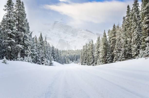 skogsväg täckt av nysnö - snötäckt bildbanksfoton och bilder