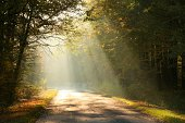 Sunlight falls on a forest road surrounded by the colors of autumn leaves.