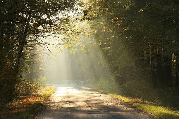 forest road in autumn morning - nature foggy calm bildbanksfoton och bilder