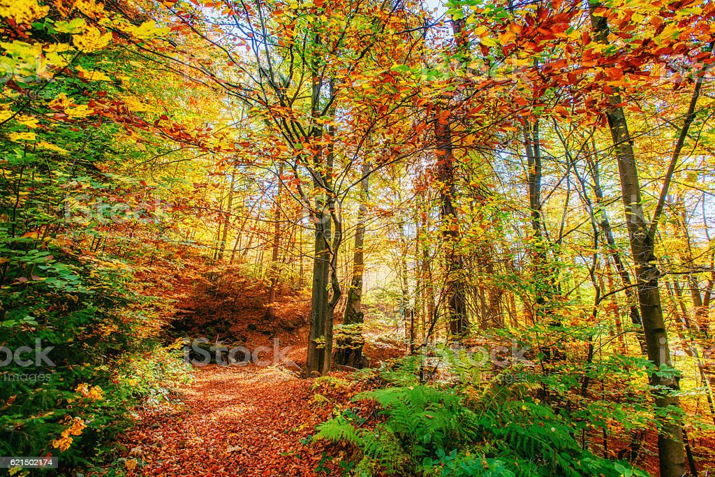 Forststraße im Herbst. Herbst Landschaft. Der Ukraine. Europa Lizenzfreies stock-foto