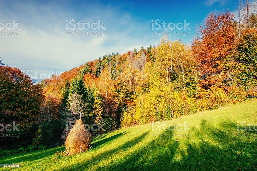 Route dans la Forêt d'automne. Automne paysage. L'Ukraine. L'Europe photo libre de droits