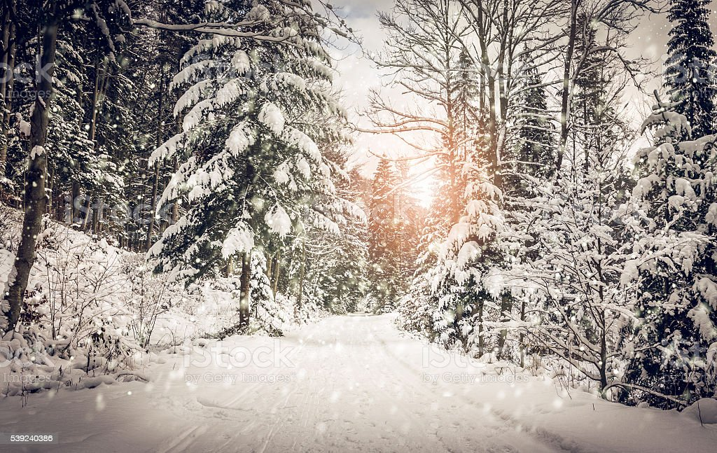 Forest road in winter royalty-free stock photo