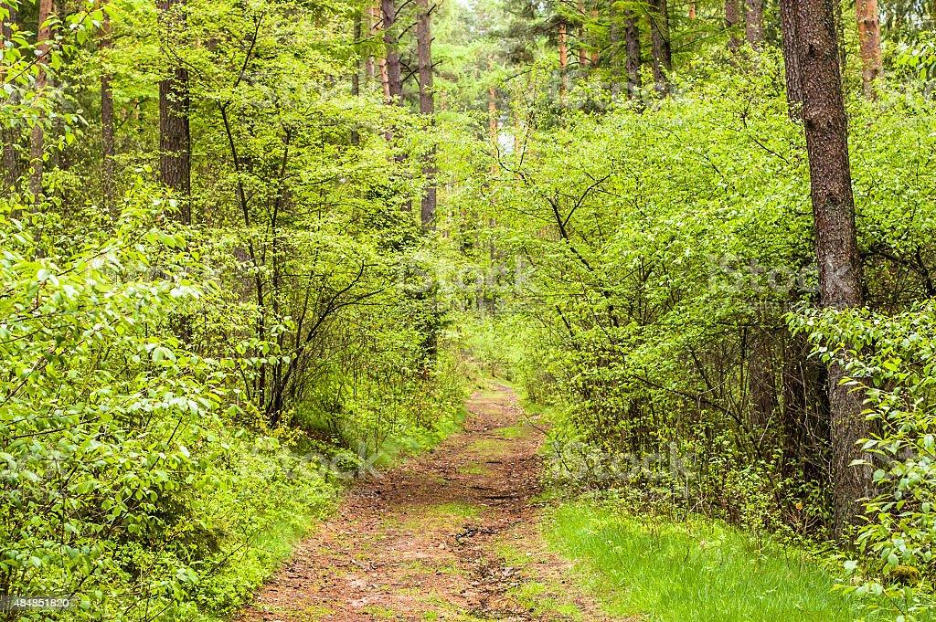 Foto De Forest Road Paisagem Folhas Frescas Nos Galhos Com Fundo De Natureza E Mais Fotos De Stock De 2015 Istock