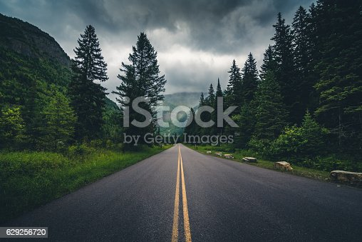 Image of a forest road on a cloudy day.