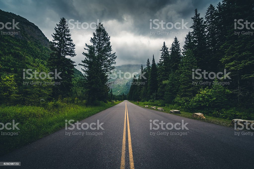 Forest road on a cloudy day. stock photo