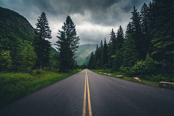 forest road on a cloudy day. - ruhe grau stock-fotos und bilder