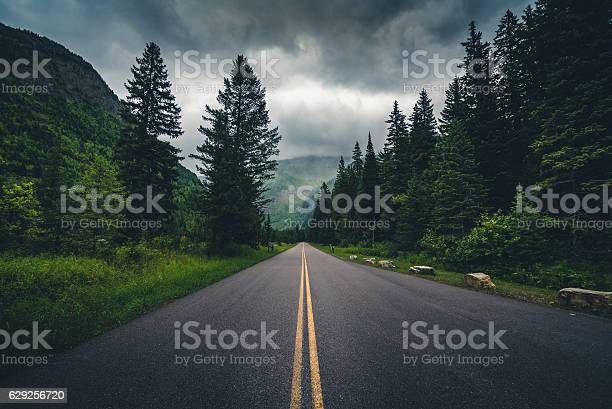 Photo of Forest road on a cloudy day.