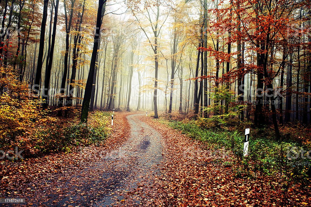 Forest road on a foggy autumn morning royalty-free stock photo