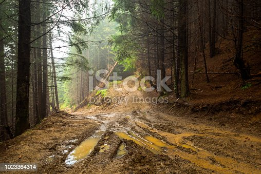 istock Forest Road 1023364314