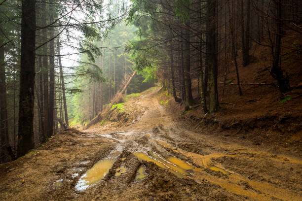 Forest Road mud forest road nature path landscape mud stock pictures, royalty-free photos & images