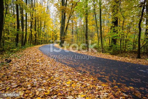 istock forest road 187563435