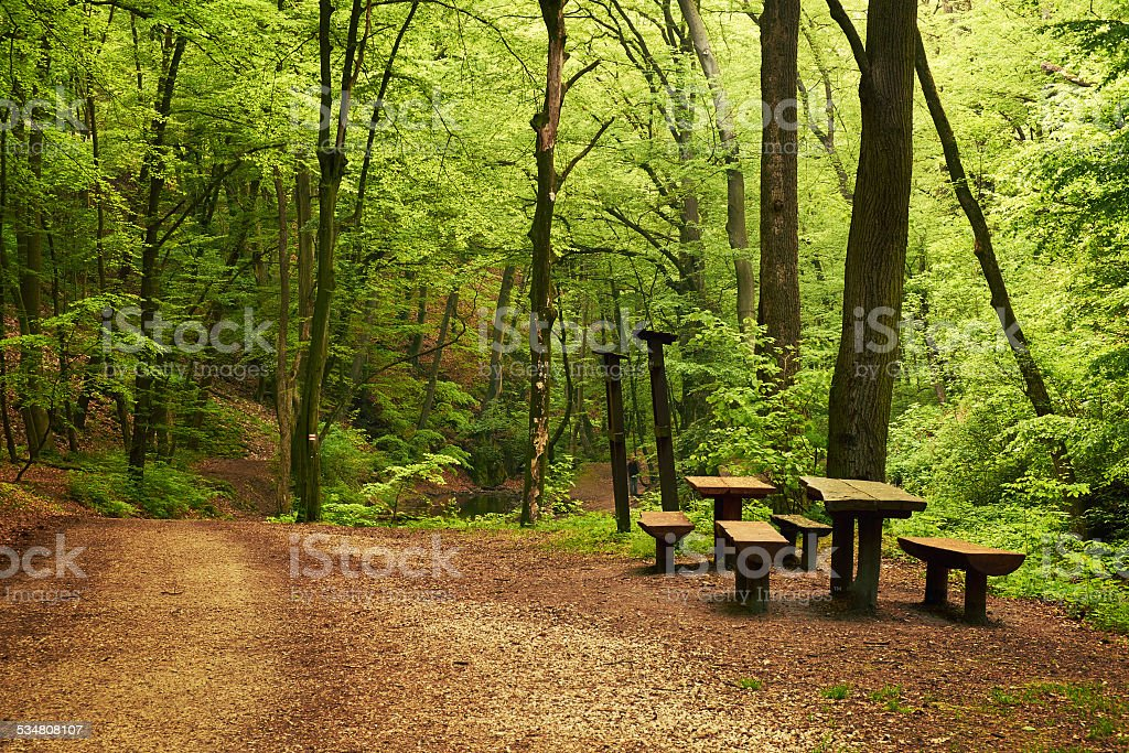 Forest road – Foto