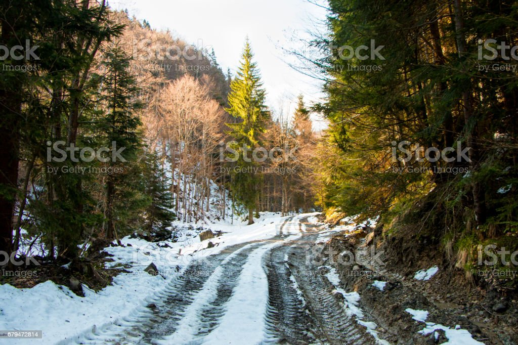 forest road 免版稅 stock photo