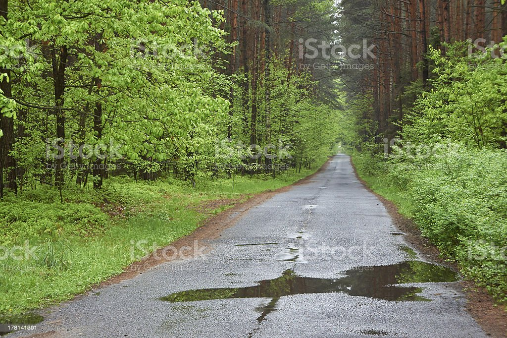 Forest road. Rainy day, spring. Poland. royalty-free stock photo
