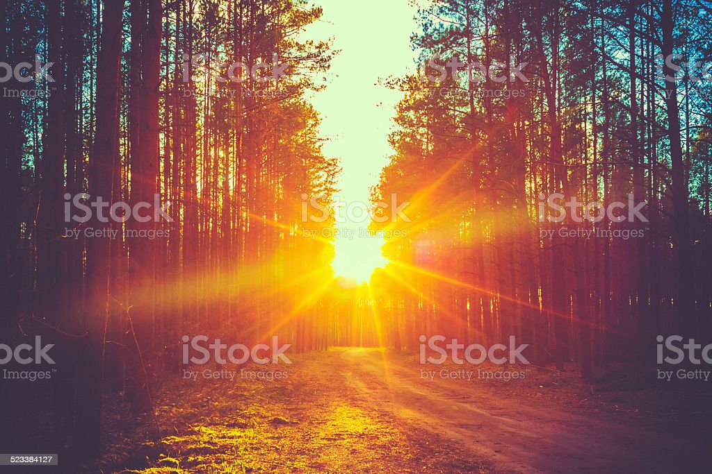 Forest Road Sunset Sunbeams royalty-free stock photo