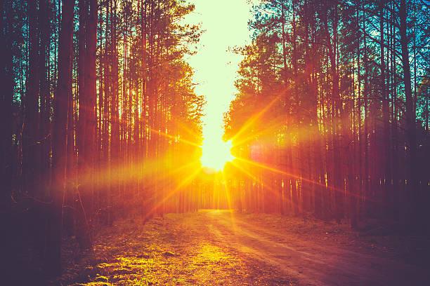 Forest road sunset sunbeams picture id523384127?b=1&k=6&m=523384127&s=612x612&w=0&h=6wmzpx2puorpvxluqblfvw66uxpw8lyfdsrpymajub0=