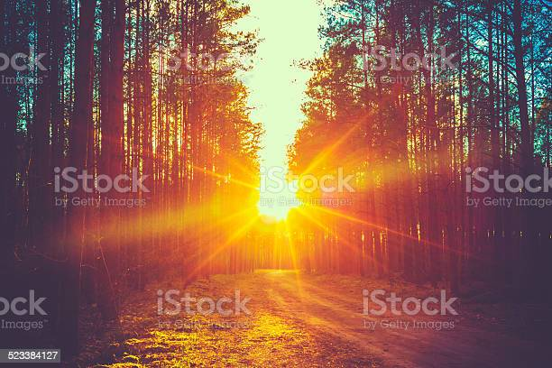 Forest Road Sunset Sunbeams Stock Photo - Download Image Now