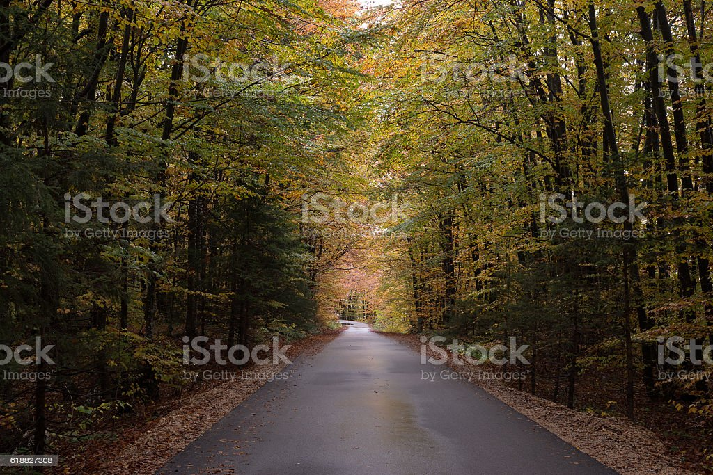 Forest road through autumn forest stock photo
