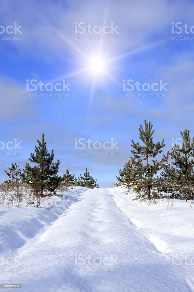 Forest road under snow royalty-free stock photo