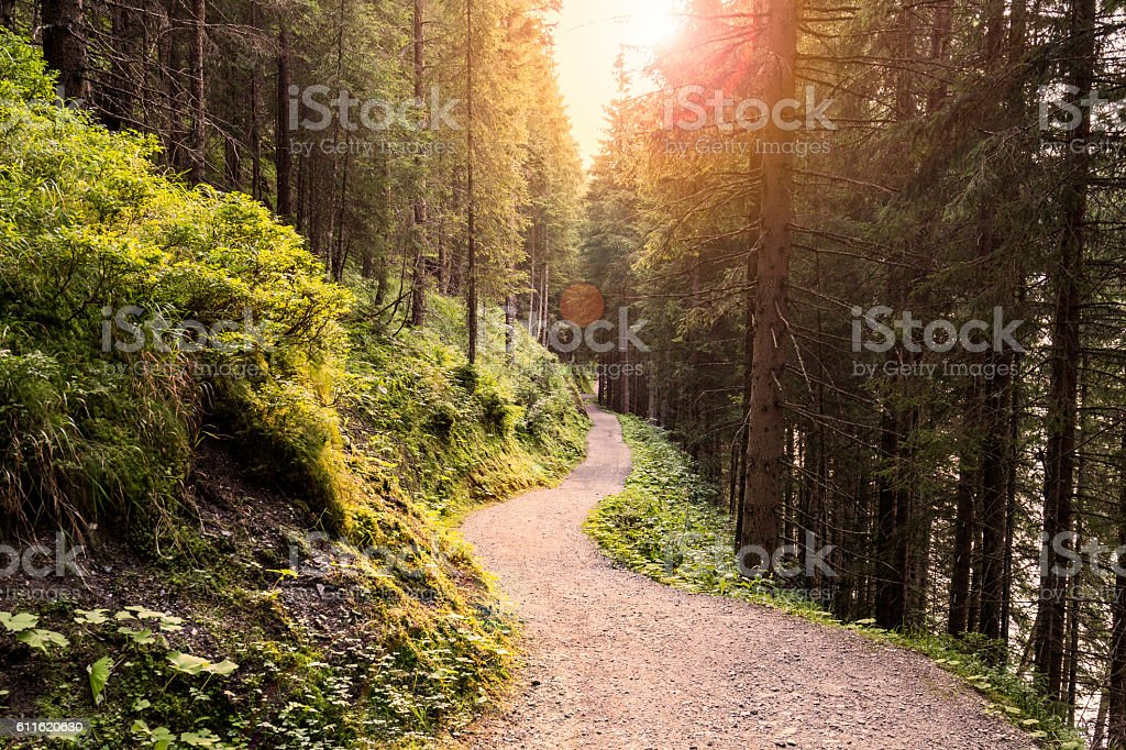 Forest Road Under Sunset Sunbeams. stock photo