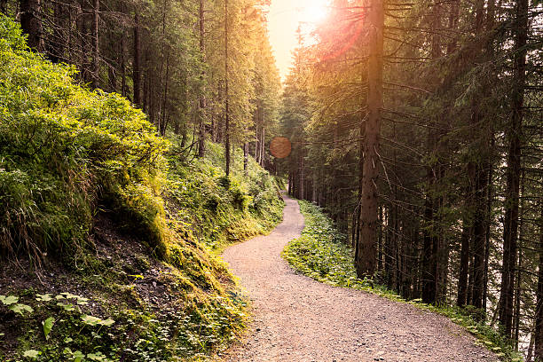 forest road under sunset sunbeams. - woodland stock pictures, royalty-free photos & images