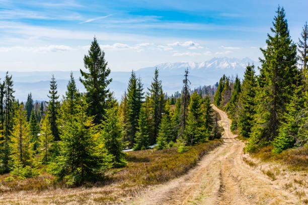 Dağların karlı zirveleri manzaralı bir turist izi yol açan orman yolu. stok fotoğrafı