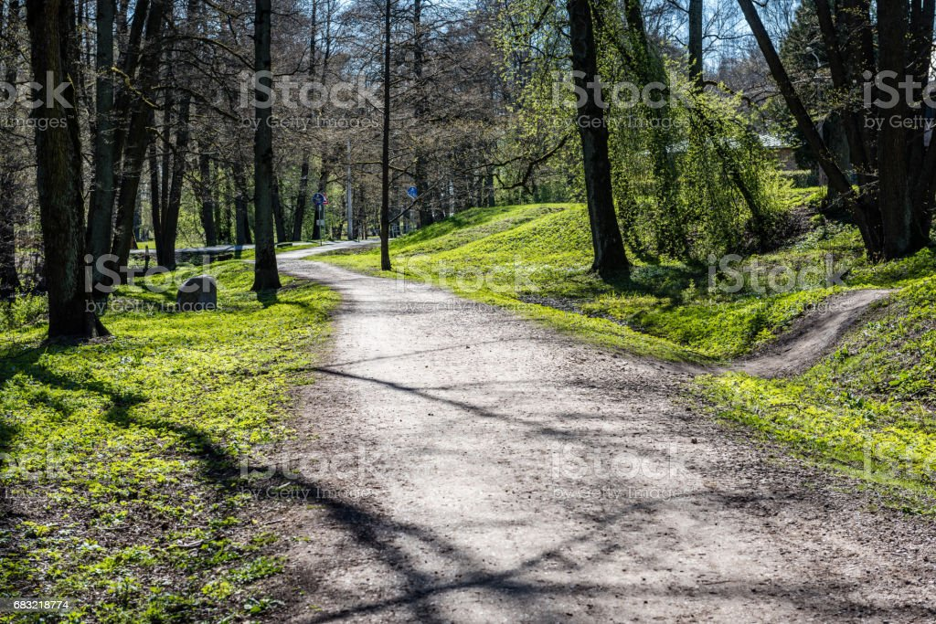 forest road with sun rays in the morning royalty-free 스톡 사진