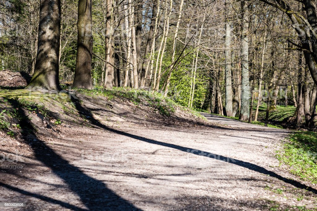 forest road with sun rays in the morning foto stock royalty-free