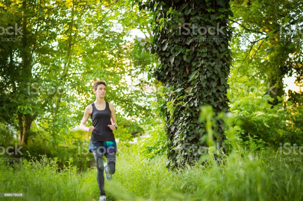 forest uitvoeren royalty free stockfoto