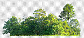 istock forest scape cut out background with clipping path on transparent picture 1319555163