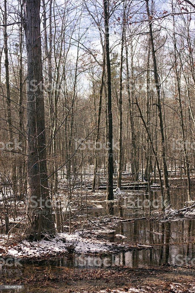 Floresta Scence com neve e folhas no térreo foto royalty-free